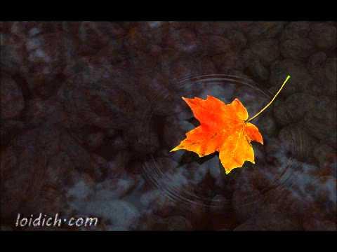 Roses - Darren Hayes