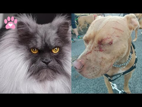 """Cat the killer fighting with a dog """"angry animals murder""""✅"""