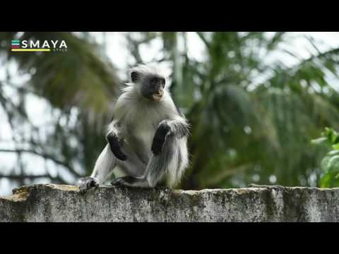 Cute Monkey - Red Colobus