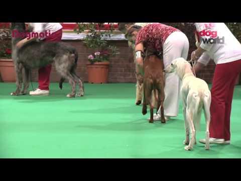 Birmingham National Dog Show 2016 - Hound group Shortlist