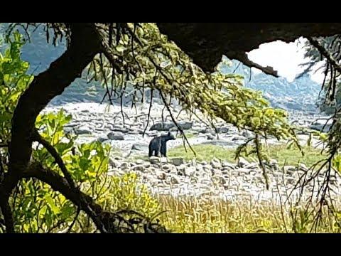 Hiking Vancouver Island: Ep5 - Beach, Bears and Pools