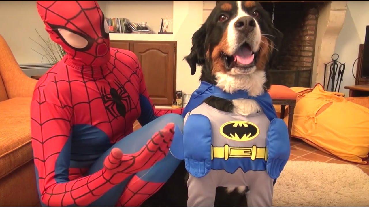 Spiderman Et La Reine Des Neiges Chien Super Héros Se Ep27 Youtube