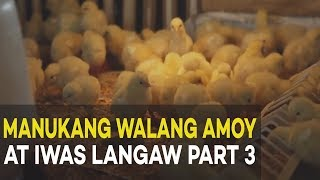 Manukang Walang Amoy at Iwas Langaw Part 3 : Broiler Management | Agribusiness