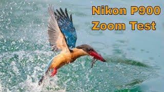 Nikon P900 Zoom Test   Stork billed kingfisher Live Fish Catching