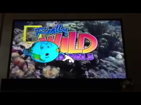 Opening Previews to Really Wild Animals 1993 VHS CTHV