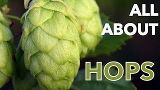 Oktoberfest | All About Hops