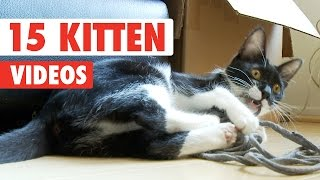 15 Cute Kittens Video Compilation 2016