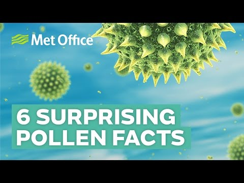 6 Surprising Facts About Pollen