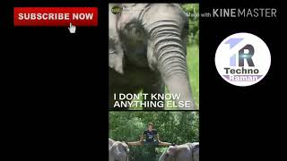 Rene Casselly jr  the 20 year old elephant trainer