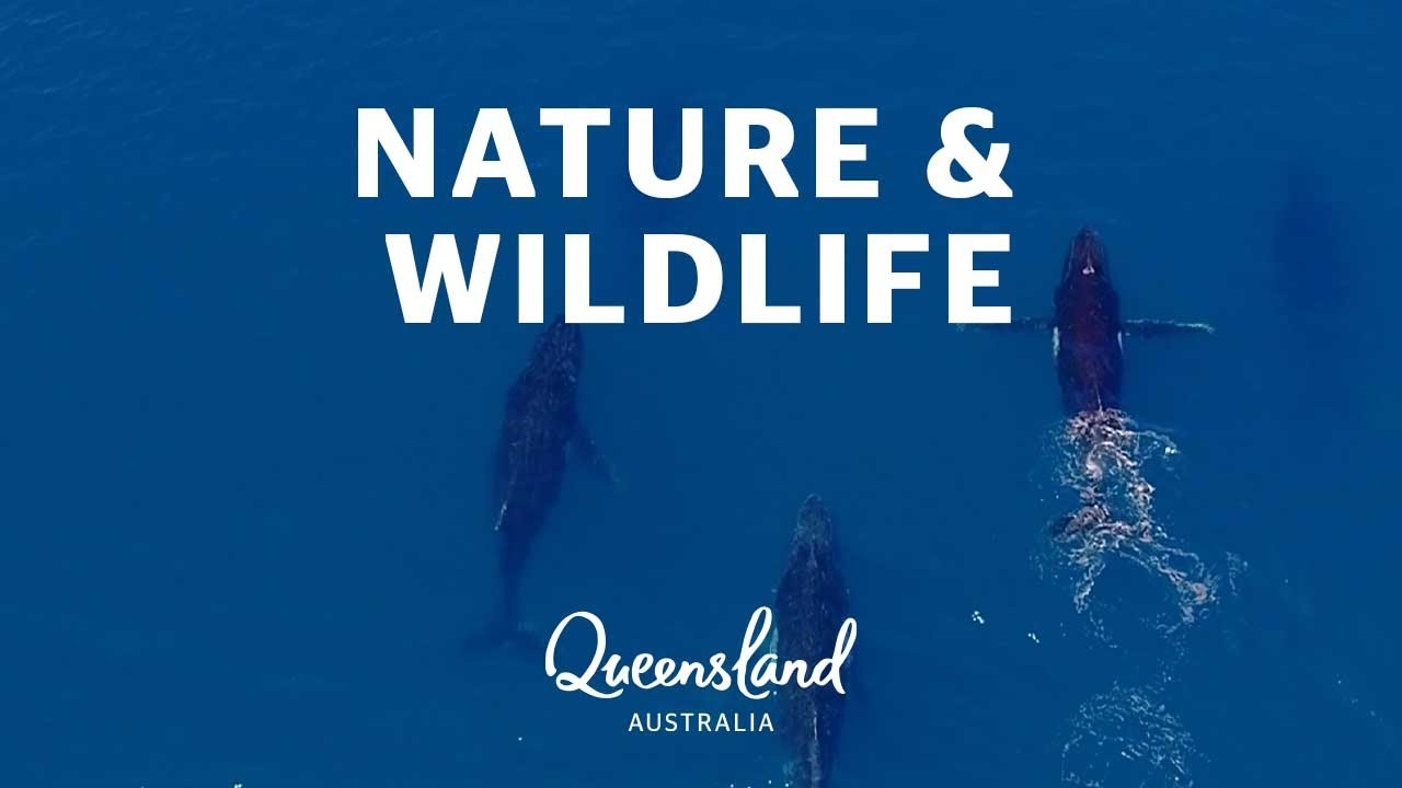 The best wildlife and nature encounters in Queensland