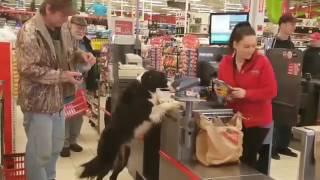 Умный собакой зашел в магазин за покупками