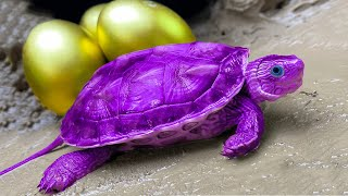 Stop Motion Sea Turtle ASMR - Catching Golden Eggs Primitive Cooking Experiment Unusual Underground