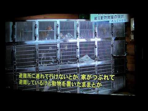 4/29 ニュース特集:東日本大震災「被災地のペット救援活動の現状」