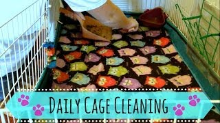 Guinea Pig Daily Cage Cleaning (fleece bedding)