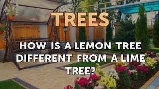 How Is a Lemon Tree Different From a Lime Tree?