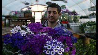 Мои цветы к 8 марта. Какие дела в этом году.
