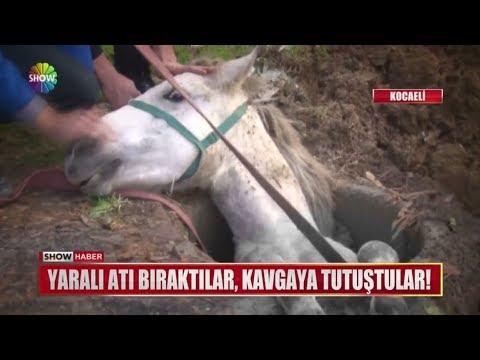 Yaralı atı bıraktılar kavgaya tutuştular!