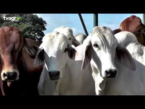 sales minerales para ganado guatemala