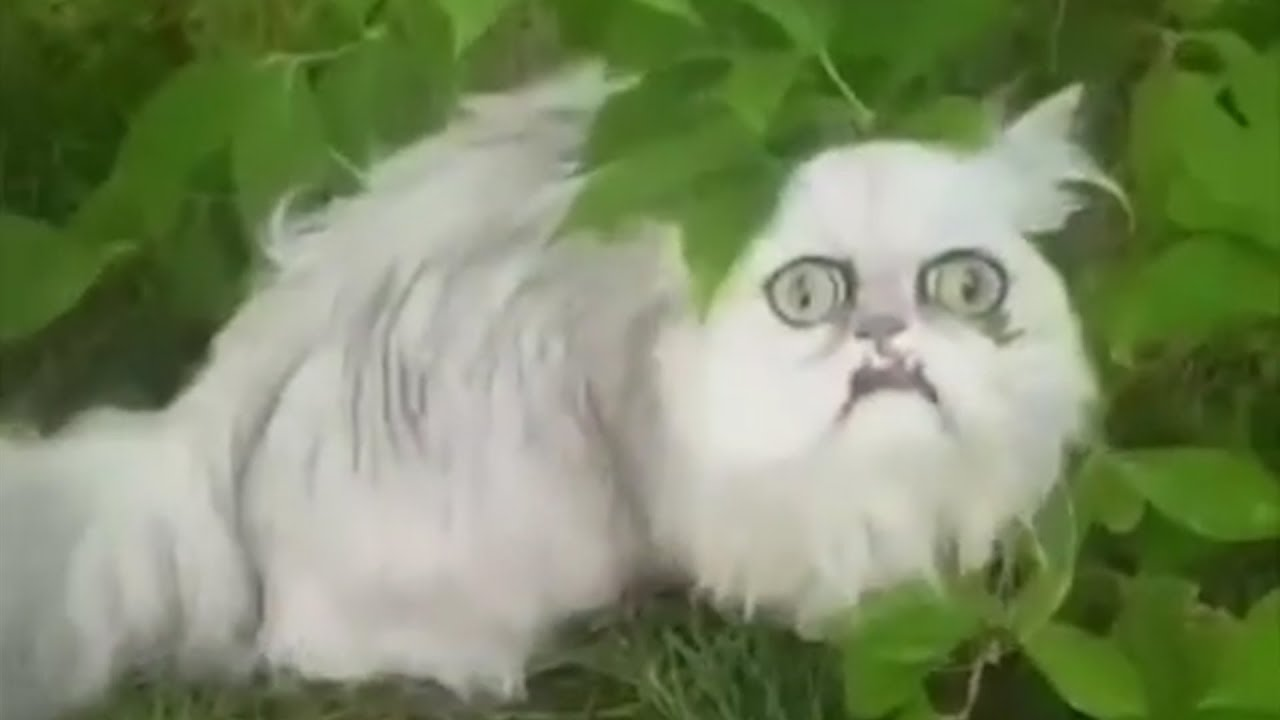 Weird Looking Cats 9