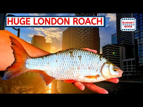 Roach Fishing In London - Big Fish From The Docks