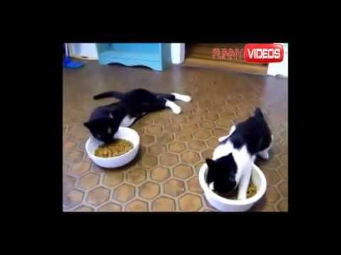 Видео про котов и валерьянку