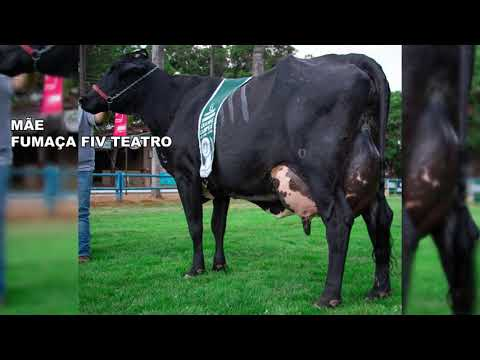 LOTE 28  1692 BR