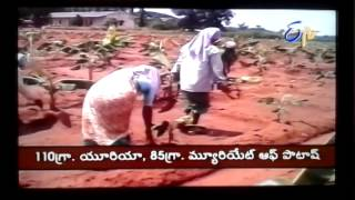 Banana Fertilizer Management