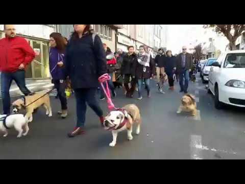 Marcha contra el maltrato animal en Lugo