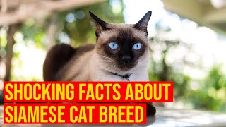 Siamese Cat Breed 10 Shocking Facts You Need To Know/All Cats