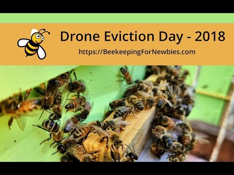 Drone Eviction Day