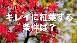 【お天気雑学】きれいに紅葉する条件とは?