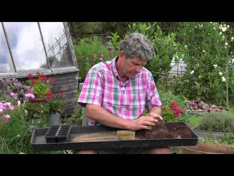 How to sow Biennial or Perennial Flowers