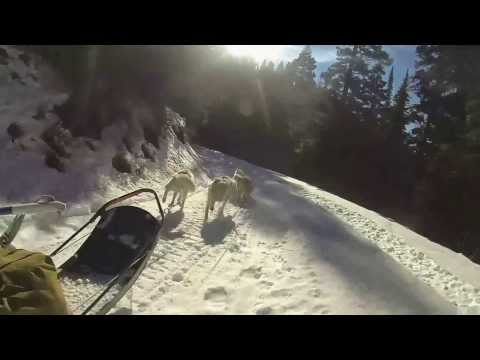 Dogsled training run Jewel Basin Road Bigfork Montana