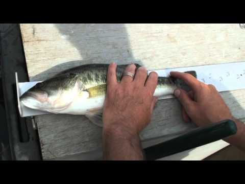 Video electric fish scaler promo for Panhandler fish filleter