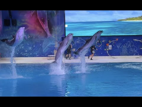 Dubai Dolphinarium 2021 | Dolphin and Seal Show