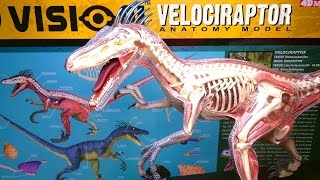 Building: 4D Vision VELOCIRAPTOR Anatomy Model Kit by 4D Master