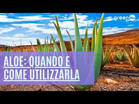 Aloe: benefici, controindicazioni, quando e come utilizzarla
