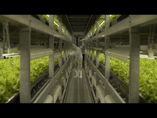 Vertical Farming in Japan - Power Trip: The Story of Energy
