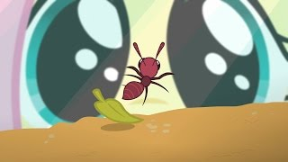 Fluttershy - Aww, look at the cute little ant farm!