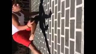 Spider Juan