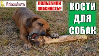 Кости для собак! ОПАСНОСТЬ или ПОЛЬЗА? Videoohota
