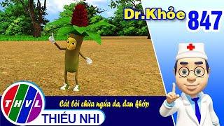 Dr. Khỏe - Tập 847: Cát lòi chữa ngứa da, đau khớp
