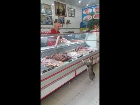 Cat Shops for Meat at Deli Counter - 988028-1