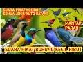 Suara Pikat Burung Kecil Ribut Suara Burung Ribut Paling Oke Di Jamin  Berhasil  Mp3 - Mp4 Download