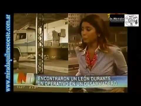 Hallan León en Calchaquí y Lamadrid - La Mirada de Quilmes Oeste