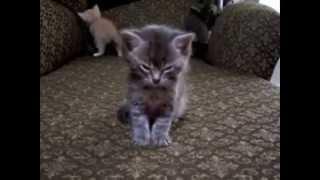 Самые милые котята (Часть 1) / Very sweet kettens (Part 1)