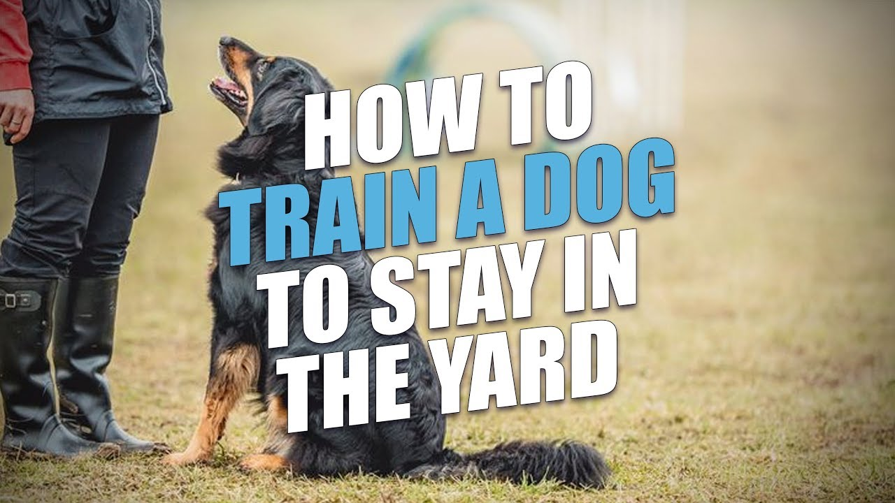 How to Train a Dog to Stay in the Yard (A Simple Method) - YouTube
