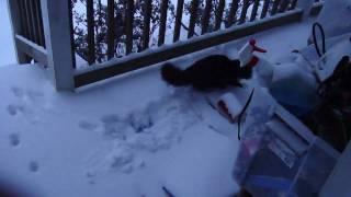 Venus in the snow