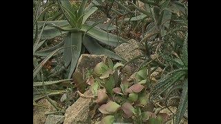 Тропический лес, плотоядные цветы, экзотические растения и многое другое