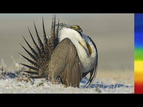 Most Imperiled Ecosystem in North America - National Geographic